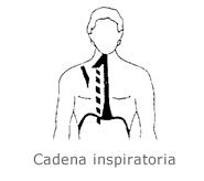 diafragma4