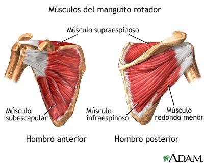 El manguito rotador | Fuente Pilates