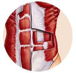 musculoscore