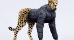 cheetah con abrigo