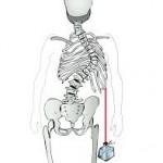 esqueleto 2